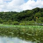 蓮華寺池公園画像